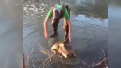 Deze tiener trotseert vriestemperaturen om hertje dat in ijs vastzit te redden