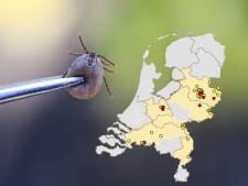 Achterhoek en Utrechtse Heuvelrug hotspots voor gevaarlijke tekenziekte