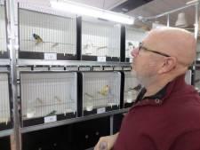 Kleurrijke vogelcharme bij vogeltentoostelling Woudrichem