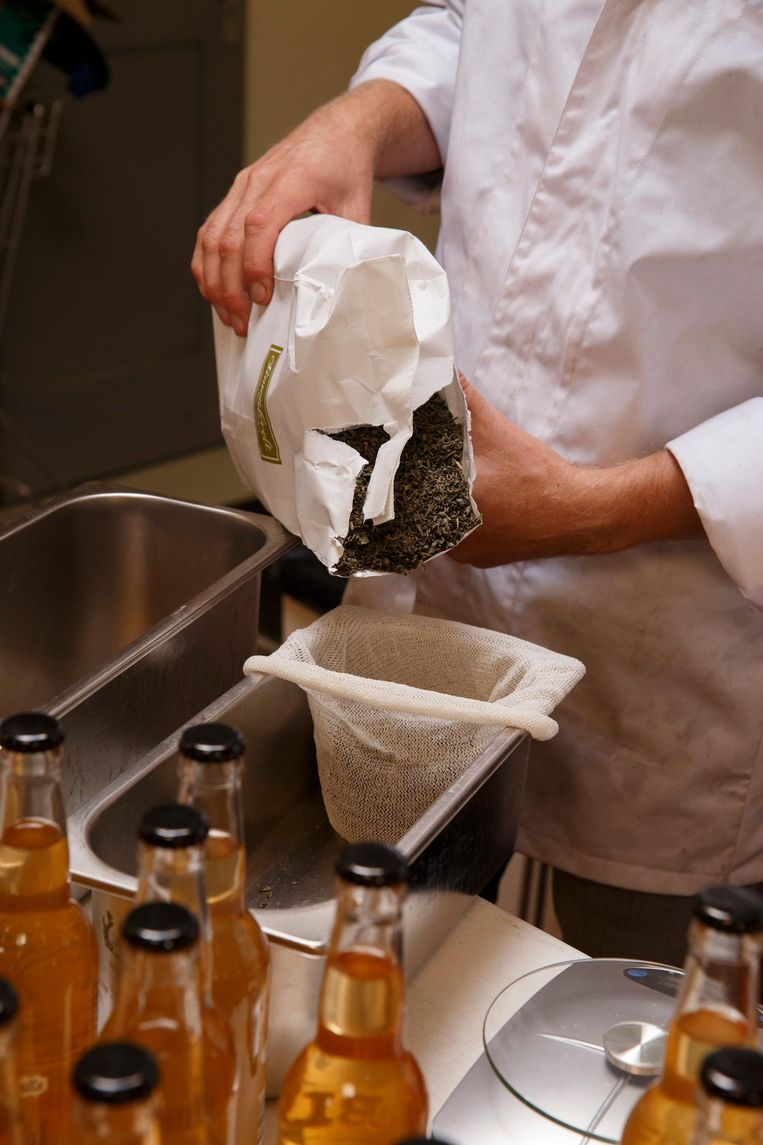 Kombucha wordt gemaakt met pure groene of zwarte thee Beeld Carly Wollaert