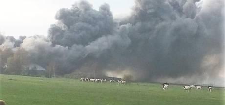 Zeker 20 stieren komen om bij stalbrand in Radewijk: rookwolken wijde omgeving zichtbaar