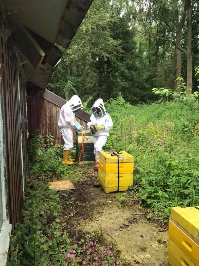 Peter en Veerle dragen al verschillende jaren zorg voor hun bijen aan het 'boshuis' in Lede.