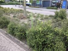 Vaste baan bij gemeente Staphorst voor medewerkers Reestmond om het groen te onderhouden