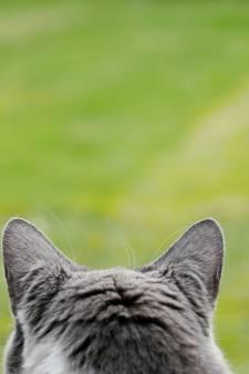 Il bat son chat à mort à Huy, une peine de travail demandée