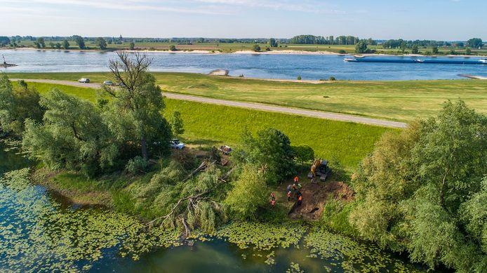 Bevers die in dijken graven, zijn een risico voor de veiligheid. Daarom grijpt Waterschap Rivierenland in, zoals hier langs de Waal bij Dodewaard.