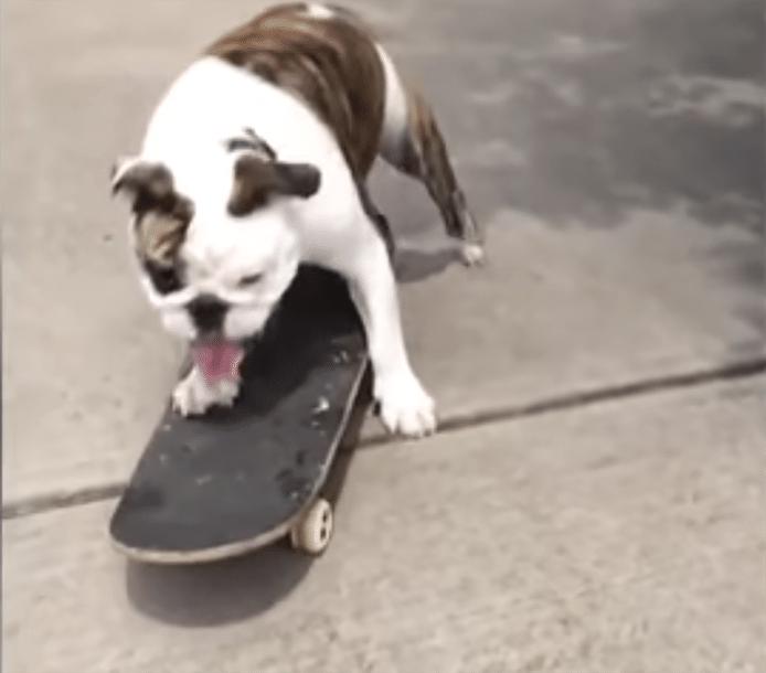 Gus op zijn skateboard