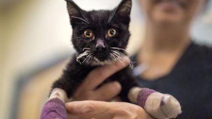 Honden en katten met brandwonden worden in Californië behandeld met revolutionaire therapie