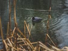 """Opnieuw vogelgriep uitgebroken rond Gentse Blaarmeersen: """"Kom niet te dicht bij de dieren"""""""