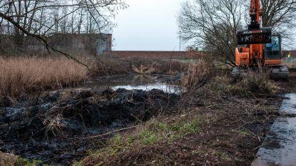 Eerste stap in opwaardering abdijpark: dichtgegroeide vijver wordt weer open gemaakt