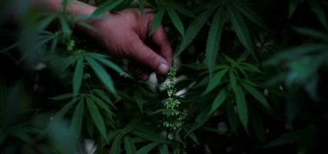 Eigen Kweek, van fictie naar realiteit: zoon dwingt familie en kennissen om vijf jaar lang cannabis te kweken