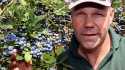 """Zomer van de Korte Keten met Local Harvest, kwekers van blauwe bessen : """"Letterlijk géén overschot hebben, dat is ons doel"""""""