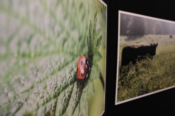 Landschapsfotograaf Paul Muylaert stelt momenteel tentoon in de Hoge Mote.