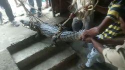 Hongerige krokodil wandelt restaurant binnen