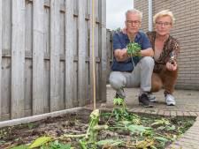 Kamervragen over weghalen wietplanten Jan en Jannie uit Hasselt; D66 wil uitzondering maken