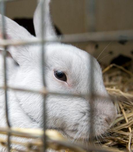 'Het is gevaarlijk heet voor konijnen', waarschuwt dierenambulance Vianen