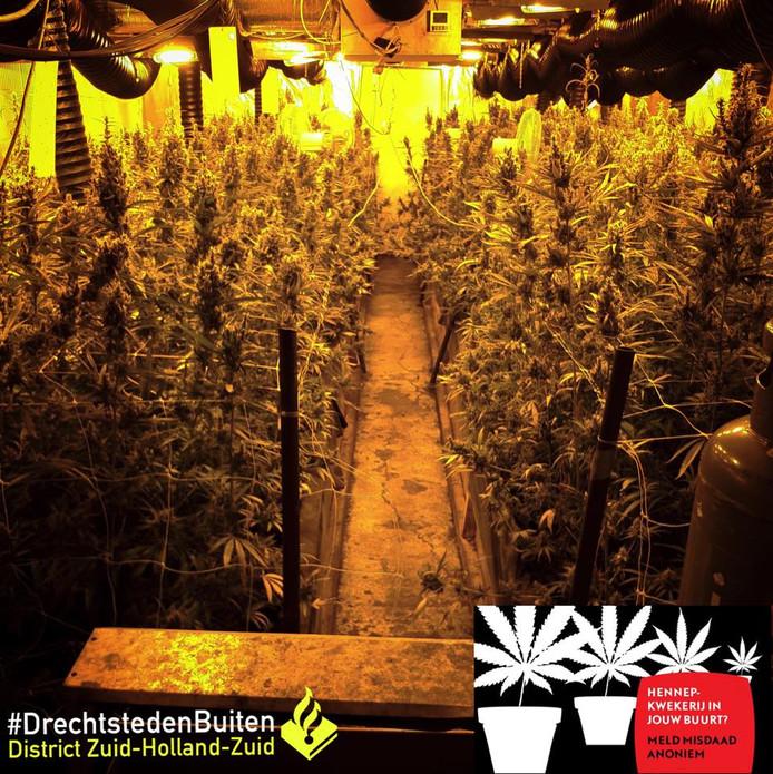 In de kwekerij stonden 1121 planten.