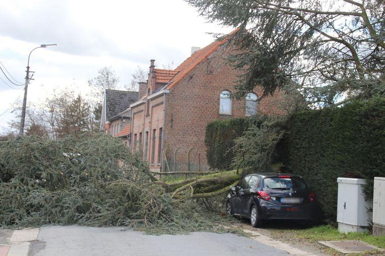 Langs Hoging in Oordegem belandde een zware tak bovenop een wagen.