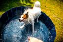 Een hond koelt af in een speciaal badje.