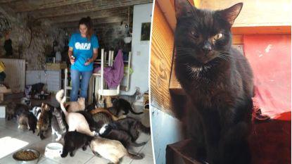Waalse vrouw wordt uit huis gezet en probeert 60 (!) katten te vergassen