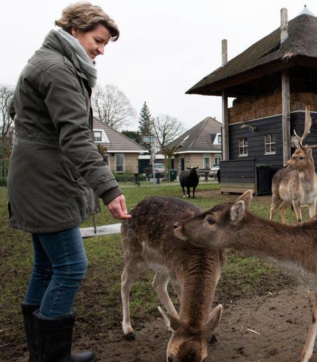 Hertenkamp steeds vaker dumpplek: 'Wat bezielt iemand om oliebollen aan herten te geven?'