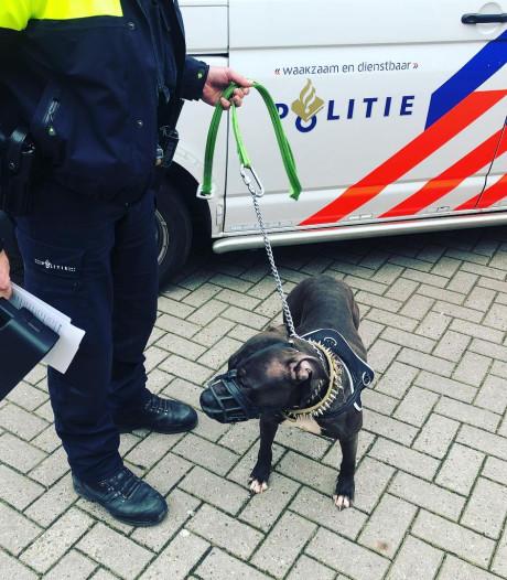 Hond in beslag genomen na bijtincident Nijmegen