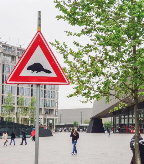 Virtueel fietsen op de Veluwe in hartje Rotterdam: 'Pas op voor wilde bevers!'
