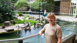"""Heidi zorgt al 25 jaar voor de pinguïns van de Antwerpse Zoo: """"Geboorte van Urban was een speciaal moment"""""""