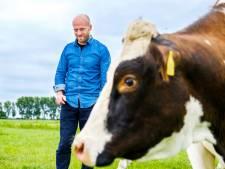 'De koe blijft twee dagen bij de slachterij om weer rustig te worden en wordt dan geslacht'