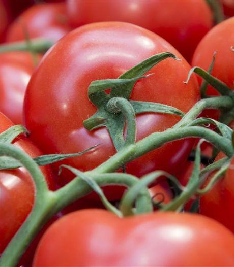 Sla je slag: tomaten nu spotgoedkoop door hitte van vorige maand