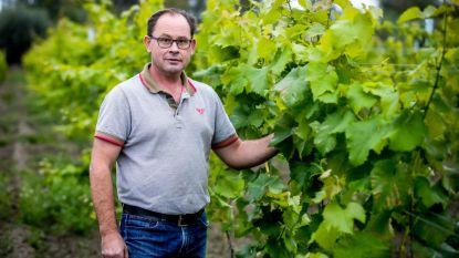 Wijnbouwer Marino Moenaert wil schuimwijn produceren