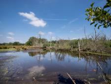 't Wordt weer natter in natuurgebied Zunasche Heide