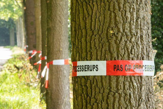 Linten om bomen in het buitengebied van Eemnes.
