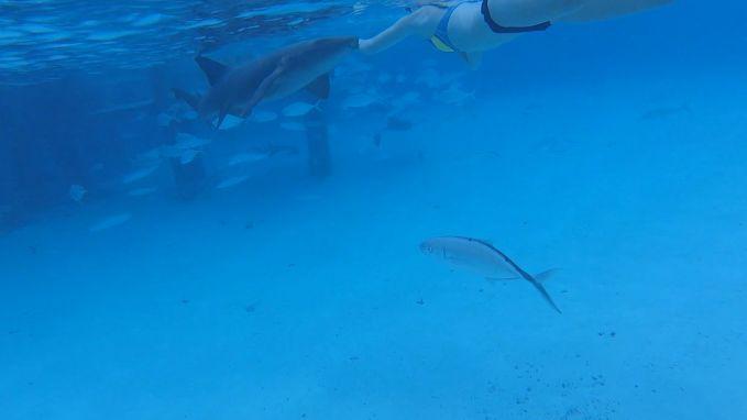 Vrouw in de arm gebeten door haai tijdens snorkelen