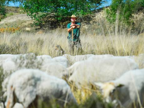 Boswachters doen live-verslag uit Brabantse natuurgebieden