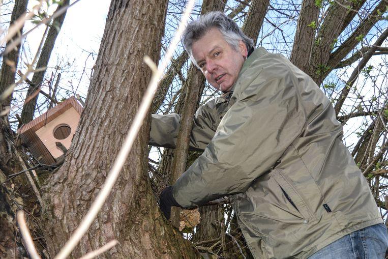 Vrijwilligers zorgen met prioriteit voor nestkasten aan de Schommeldreef om de steenuilen daar meer broedplaatsen te geven.