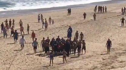 """Haai bijt man (26) dood voor kust Massachusetts: """"Eerste dode sinds 1936"""""""