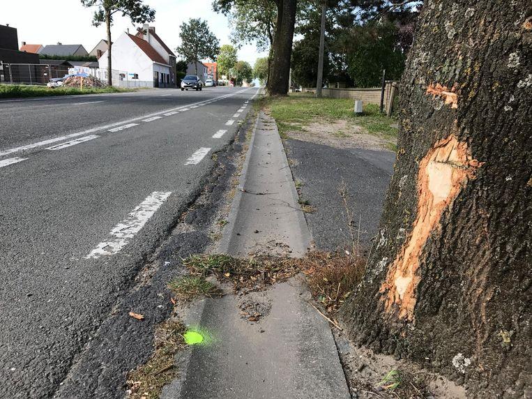 Het paard met de koets botste eerst rechts op een boom, waarna het dier een heel eind verder schade aanrichtte aan enkele auto's.