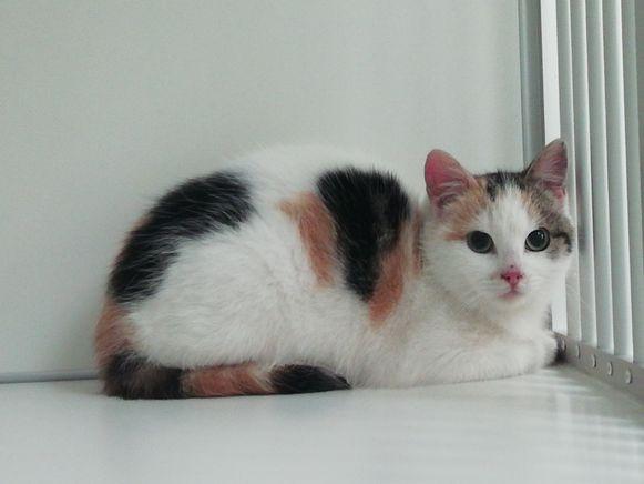 Het katje Gusto vond een nieuwe thuis bij Poperingenaars Aliene en Glenn.