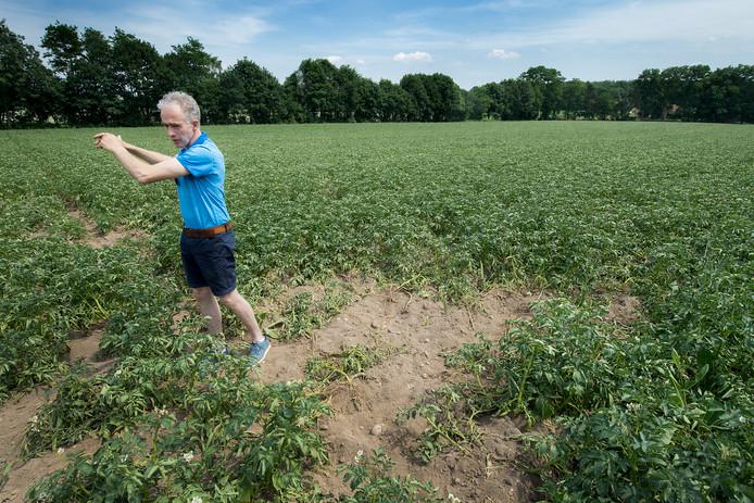 Akkerbouwer Jean Jansen bij de schade door zwijnen op zijn aardappelveld.