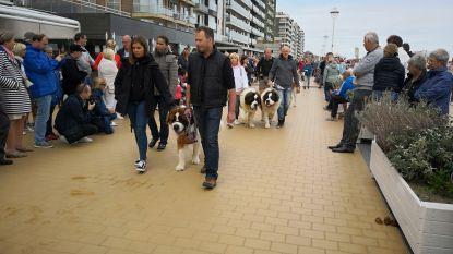 Nieuwpoort maakt zich op voor  50ste Sint-Bernardusfeesten