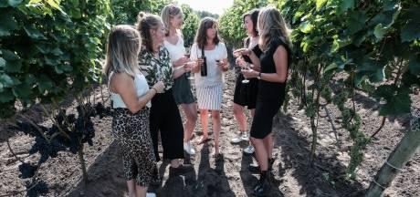 Zon heeft vrij spel in wijngaard Hesselink