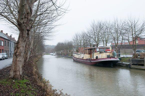 Het plan voor het kappen van de bomen langs de jachthaven in Oudenaarde krijgt tegenwind vanuit de oppositie in de gemeenteraad.