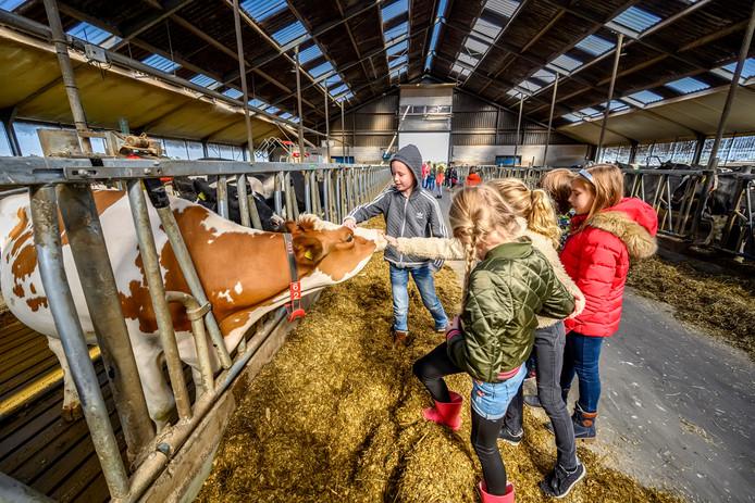 Zo snel sta je niet oog in oog met een koe. Dus als je een keer de kans krijgt kun je die net zo goed even een aai over de bol geven.