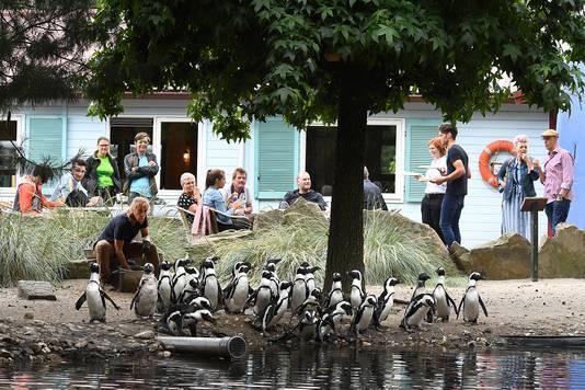 Deelnemers aan het Walking Dinner kregen bij de pinguïns van ZooParc Overloon een eerste amuse aangeboden. De pinguïns op hun beurt kregen ook wat lekkers, vis.