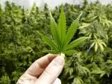 Drugsschuur in Chaam gesloten