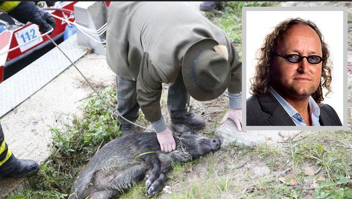 De jager buigt zich over een gered zwijntje. Inzet : Dion Graus van de PVV.