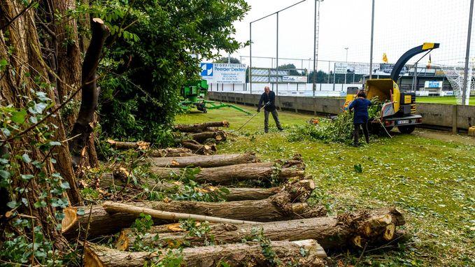Zieke bomen Boechoutsesteenweg vervangen