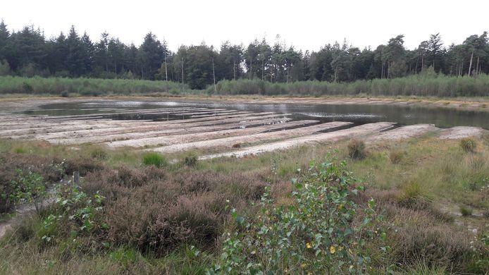 BREDA - Het visven in het Mastbos, vlakbij de Overaseweg, is voor de helft drooggevallen. De oude zandruggen komen bloot te liggen bij een lage waterstand.