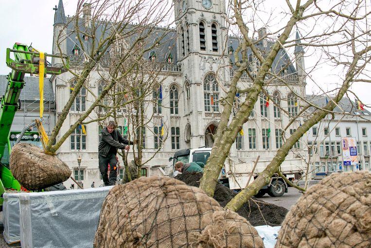 Een veertigtal meerstammige bomen worden op de Grote Markt in grote boombakken geplaatst.