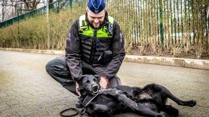 Speelse Billy heeft serieuze taak als eerste dynamische explosievenhond van België